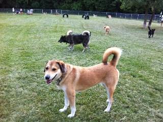 Akron Dog Park