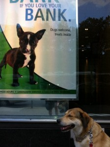 TD Bank - Dogs Allowed
