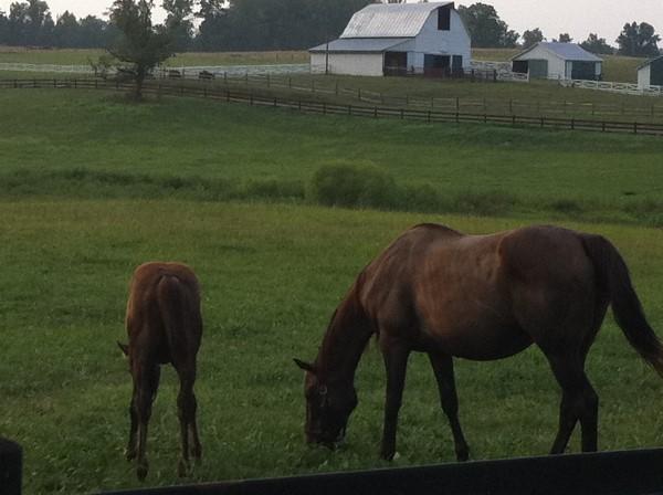 Horses in Virginia Pasture
