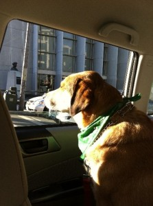 Libby Leaving San Francisco