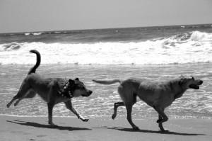 Libby at Huntington Dog Beach