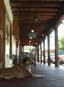 Libby the Dog - Old Town Albuquerque