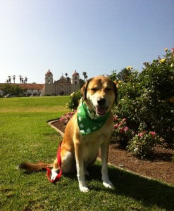 Libby the dog - Santa Barbara