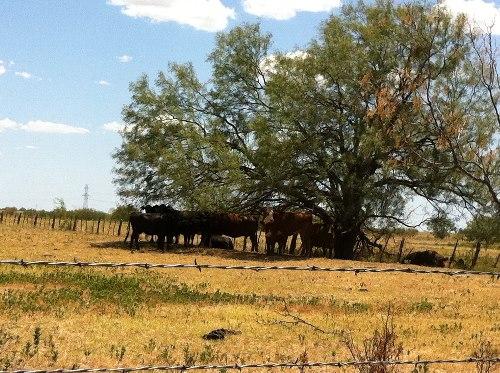 Palo Pinto County, TX