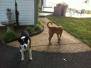 Rooster Cogburn and Toby