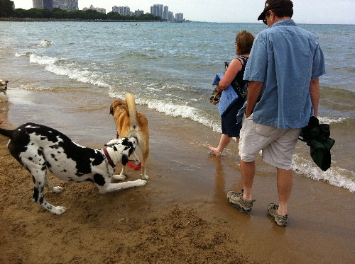 Bayshore Dog Beach - Chicago
