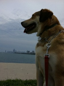 Libby - Lake Michigan