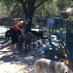 Lotta Dog, Laurel Canyon